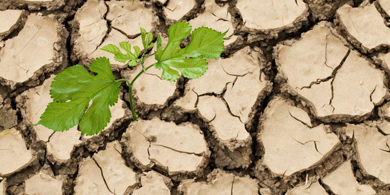 Applying Soil Water and Groundwater Data to Developing Drought Adaptation Strategies